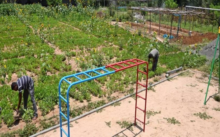Private school converts a portion of its playground into farmland